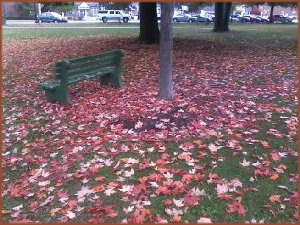 an empty park bench surrounded by a carpet of multi-colored fallen maple leaves